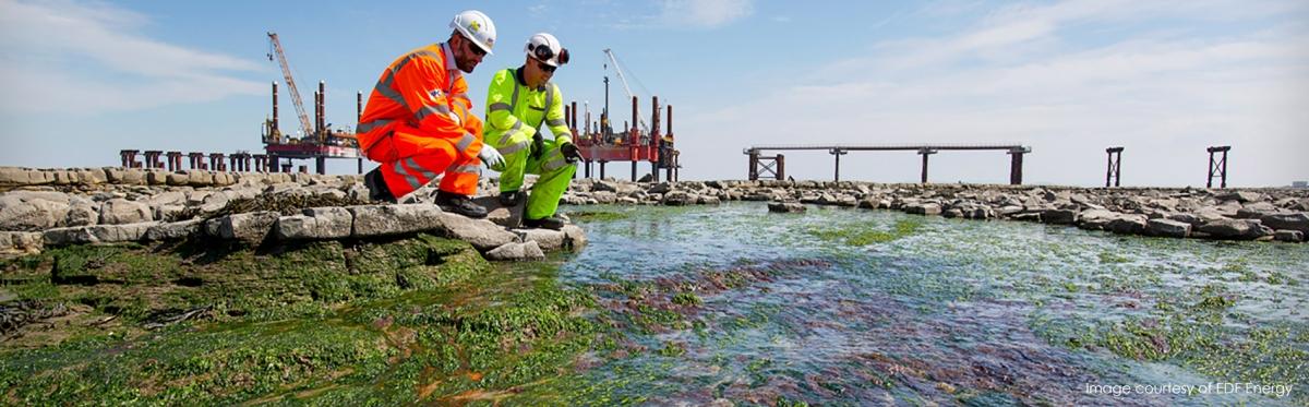 Corallina Mitigation Project